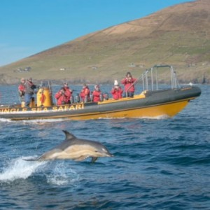 Dingle Sea Safari