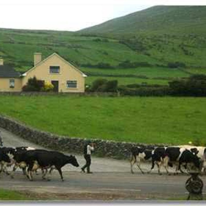 Garvey's Farmhouse Bed & Breakfast, Ventry